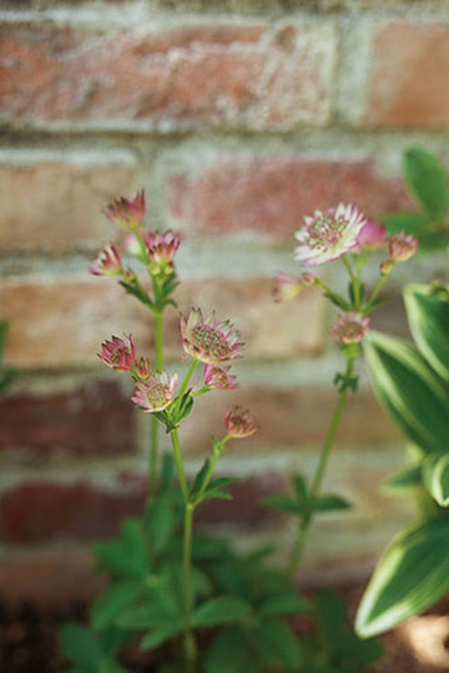 画像1: 切り花にもおすすめの草花