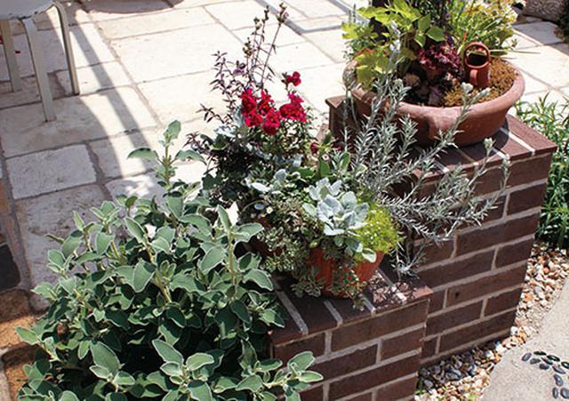 画像: ▼IDEA まずは丈夫な植物を選ぶのがポイント