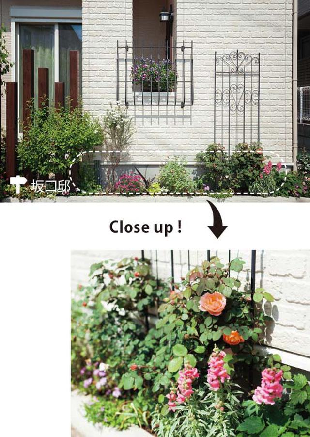 画像: 壁際20cmの花壇