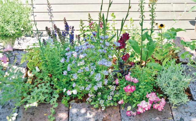 画像3: 植栽図