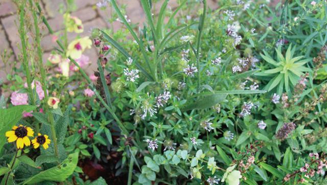 画像1: 春から初夏にかけては色どり豊かな花から爽やかな緑への変化を愛でて