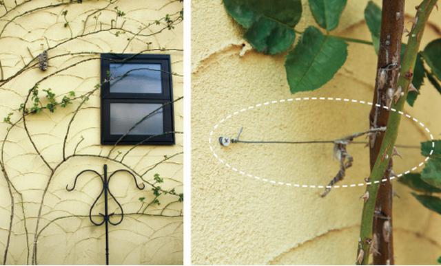 画像: 家屋の壁面に穴を開けてビスを打ち、そこにワイヤーを巻きつける。穴が開けられない場所はネットやトレリス(飾り用のフェンス)を使うとよい。