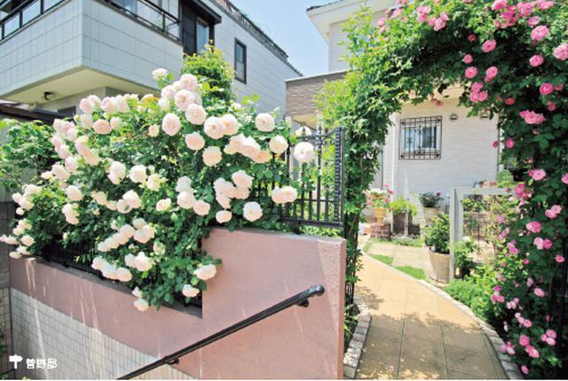 画像2: アーチやパーゴラ、壁面、フェンスなどバラの演出法はさまざま