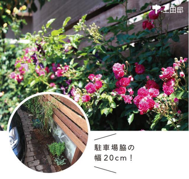 画像4: 小さな庭に最適! 一株のつる性バラで優美なローズガーデンに!