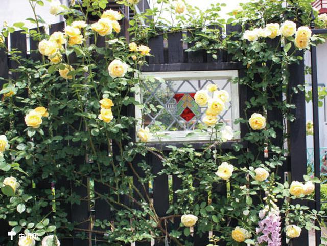 画像3: アーチやパーゴラ、壁面、フェンスなどバラの演出法はさまざま