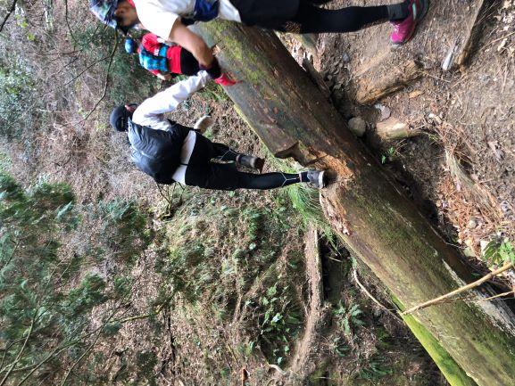 画像: 巨木をまたいだり、まさに自然の中の大冒険!