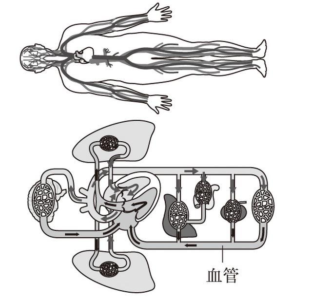 画像: 寝ているときは血液が脳に十分送られる。