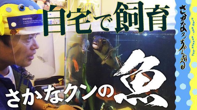 """画像: 【もはや水族館!?】さかなクンが飼う""""お魚""""って… youtu.be"""