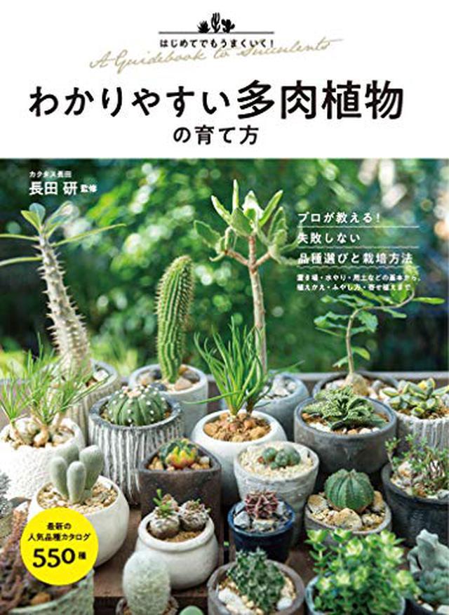 画像3: 【多肉植物とは】選び方のポイント まず初心者は種類(春夏秋冬の生育型)を知っておこう