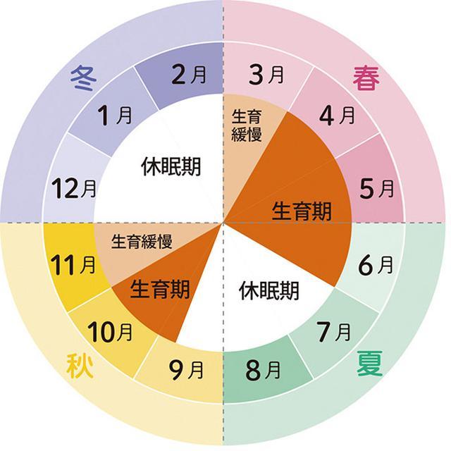 画像: ▼ 春秋型の生育サイクル