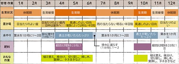画像: グラプトペタラム属の栽培カレンダー