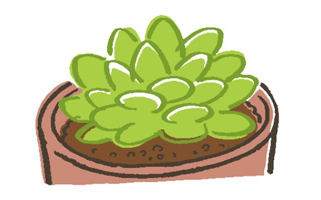 画像1: 多肉植物に適した用土とは?