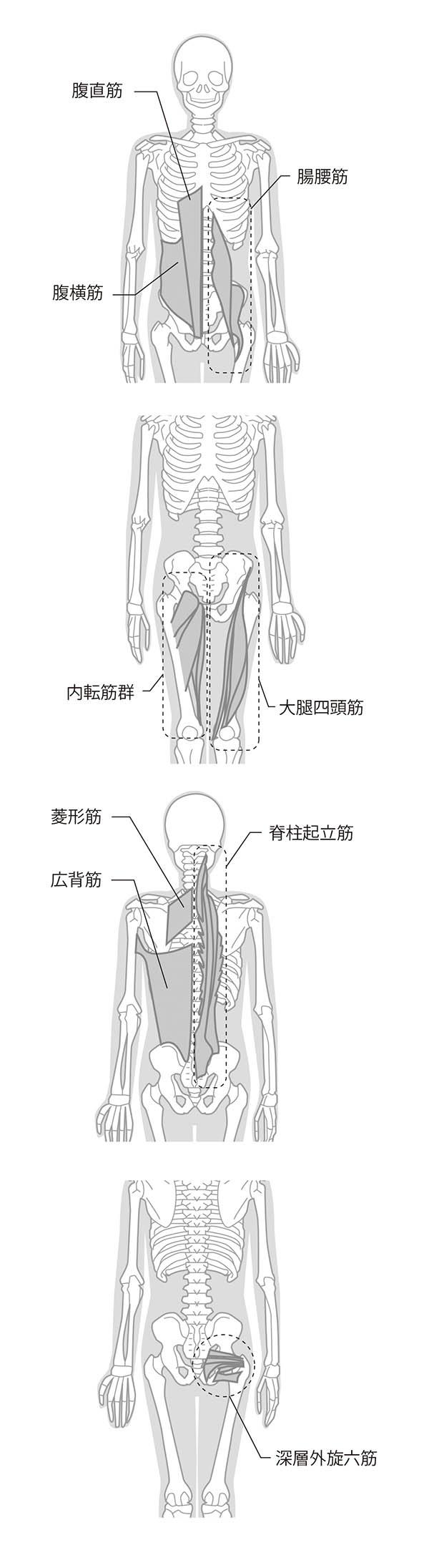 画像: 側弯症矯正トレーニングで鍛えられる筋肉