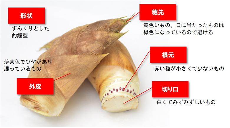 画像: タケノコの写真:農林水産省のホームページより www.maff.go.jp