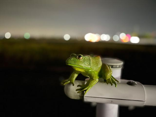 画像: 街灯の光がほとんど入らない場所で撮影。背景の玉ボケが美しい。