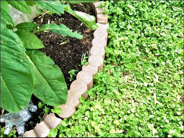画像: 1つの花壇につき5個ほどでOK