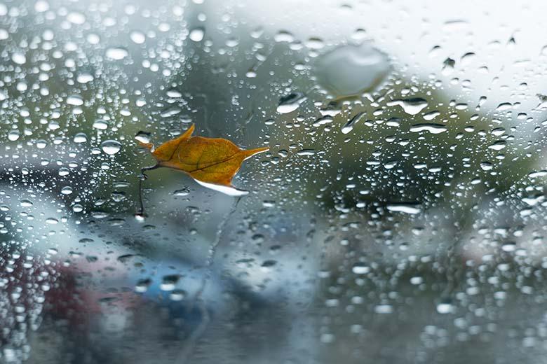 """画像: 撮影旅行で車を駐車場に停めた際、フロントガラスに付着した落ち葉と水滴に着目して撮影。雨の日には、こういった身近な所にも""""絵になる素材""""が転がっている。 パナソニック LUMIX DC-S5 LUMIX S 20-60mm F3.5-5.6(60mmで撮影) 絞り優先オート F5.6 1/60秒 +0.7補正 WB:曇天 ISO320"""