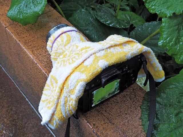 画像: 撮影機材(ボディ+レンズ)が防塵・防滴仕様になっていても、撮影が長引くようならば、極力雨に濡れないよう工夫する必要があるだろう。ここでは、用意したハンドタオルを利用。適度な大きさに畳んで上から被せ、レンズフードの所を輪ゴムで固定している。