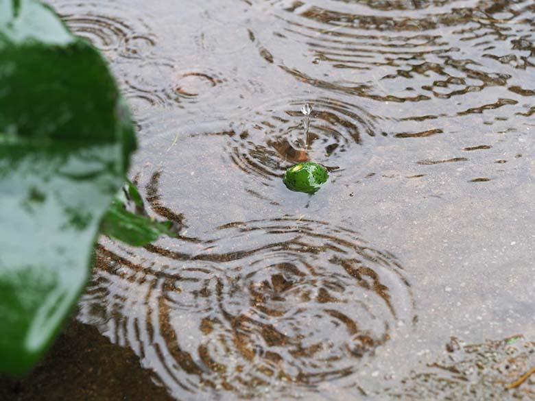 画像: 雨によって遊歩道に水溜りができ、そこに青い木の実が浮いていた。その水面上に、樹木の葉から滴り落ちる水滴で水紋が発生している。望遠マクロレンズで木の実を意識しながら構図を決めて、水紋が広がる瞬間を狙って何度もシャッターを切る。その結果、木の実のすぐ近くに落ちた水滴が跳ね返って(?)球体になった瞬間が撮影できた。 オリンパス OM-D E-M1 MarkII M.ZUIKO DIGITAL ED 60mm F2.8 Macro 絞り優先オート F4 1/125秒 WB:オート ISO320