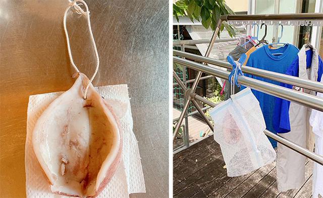 画像: 洗濯物と一緒に干されるイカ。