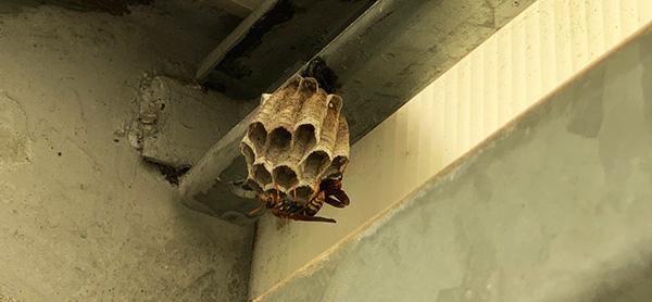 画像: 直径3センチほど。たぶん出来立てのハチの巣。