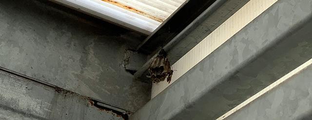 画像: 寝ている間に成仏したハチが1匹。
