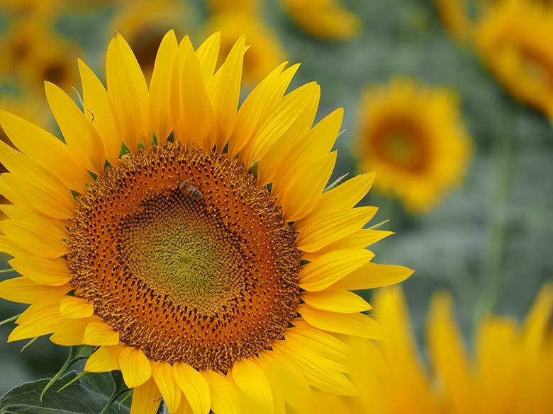 画像: 露出補正を行わず、ストレートに撮影したカット。明るい黄色の花(花弁)の影響によって、肉眼よりも少し暗い描写になってしまった。