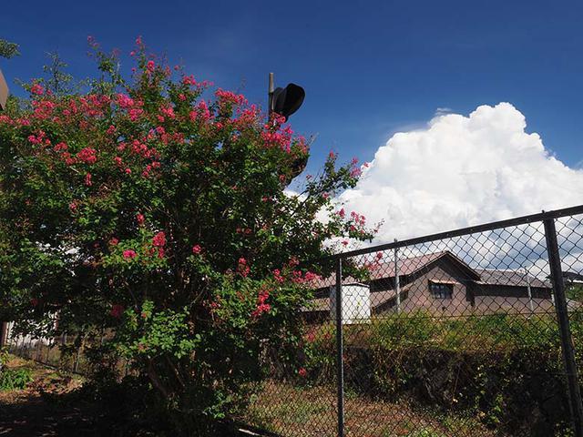 画像: 太陽が照りつける体育館のグラウンド脇に、色鮮やかなサルスベリの花が咲いていた。そして、その花(木)に近づいてみると、その先に、湧き立つ入道雲が見えた。仕上がり設定「Vivid」と、C-PLフィルターの効果。その合わせ技によって、入道雲の存在感や、青空と紅い花との対比が強調できた。 オリンパス OM-D E-M1 MarkII M.ZUIKO DIGITAL ED 12-40mm F2.8 PRO(13mmで撮影) 絞り優先オート F11 1/60秒 WB:オート ISO200 C-PLフィルター使用