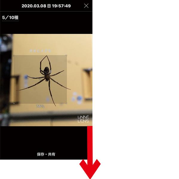 画像: アプリを起動し、目の前にいる生物をカメラでとらえる。画面の生物をタップすると……。