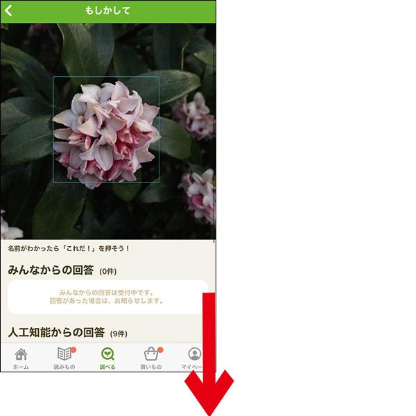 画像: 散歩中に見かけた気になる植物を、このアプリで撮影(撮影済みの写真もOK)。