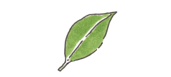 画像8: カレーで使うスパイス