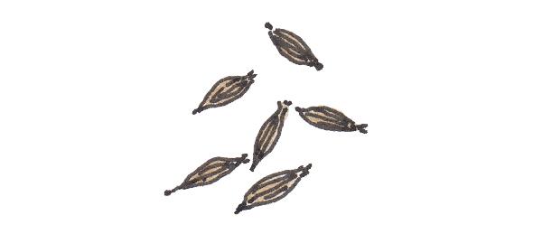 画像7: カレーで使うスパイス