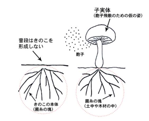 画像1: 出典:きのこらぼ www.hokto-kinoko.co.jp