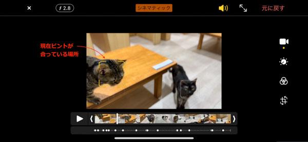 画像: 撮影時に自動認識された被写体に黄色い枠がついている。