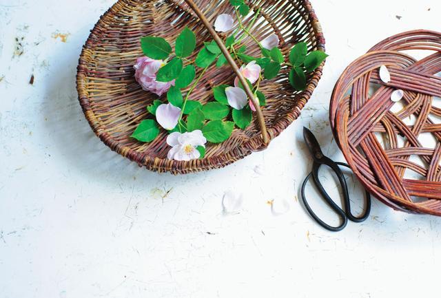画像: スコットランドのかご 作家、リズ・ベックさんを訪ねたときに持ち帰った柳の花摘みかご。バラを育てている雅姫さん。部屋に飾る一輪を摘むときに愛用