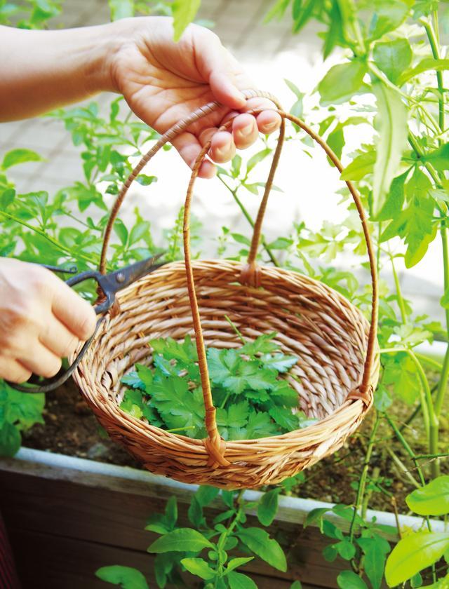 画像: ハーブを摘むのも、もちろんかごで。収穫作業が楽しくなる