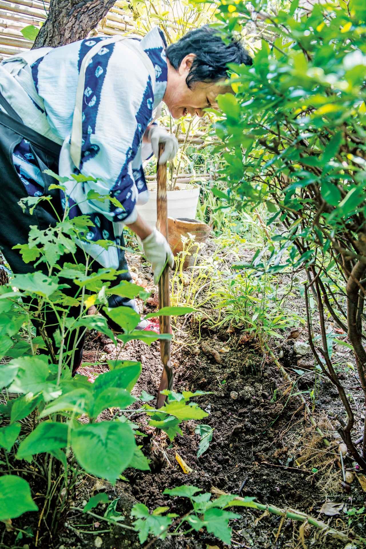 画像: 「生ごみは宝物」。庭の木の下に埋めてコンポストに