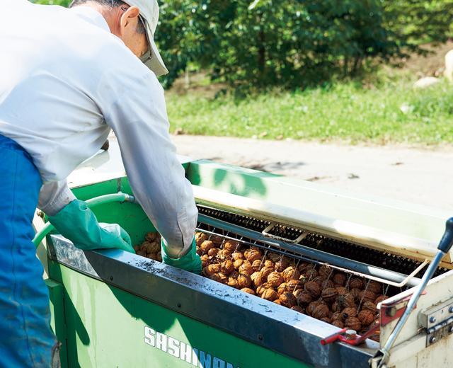 画像: 外果皮を取り除いたあと、ていねいに水で洗浄して汚れを落とし、約1カ月半、天日干しする