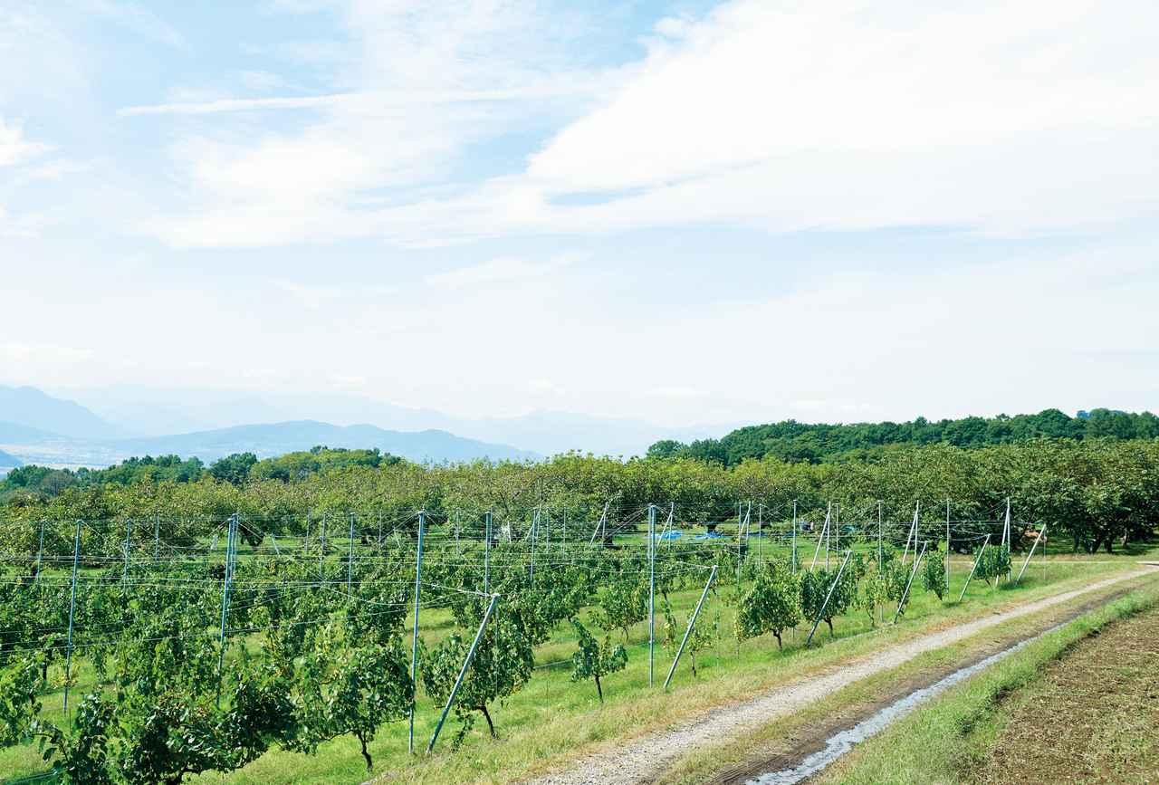 画像: くるみ栽培の試験場も兼ねたサンファームとうみでは、年間700kgのくるみが生産されている