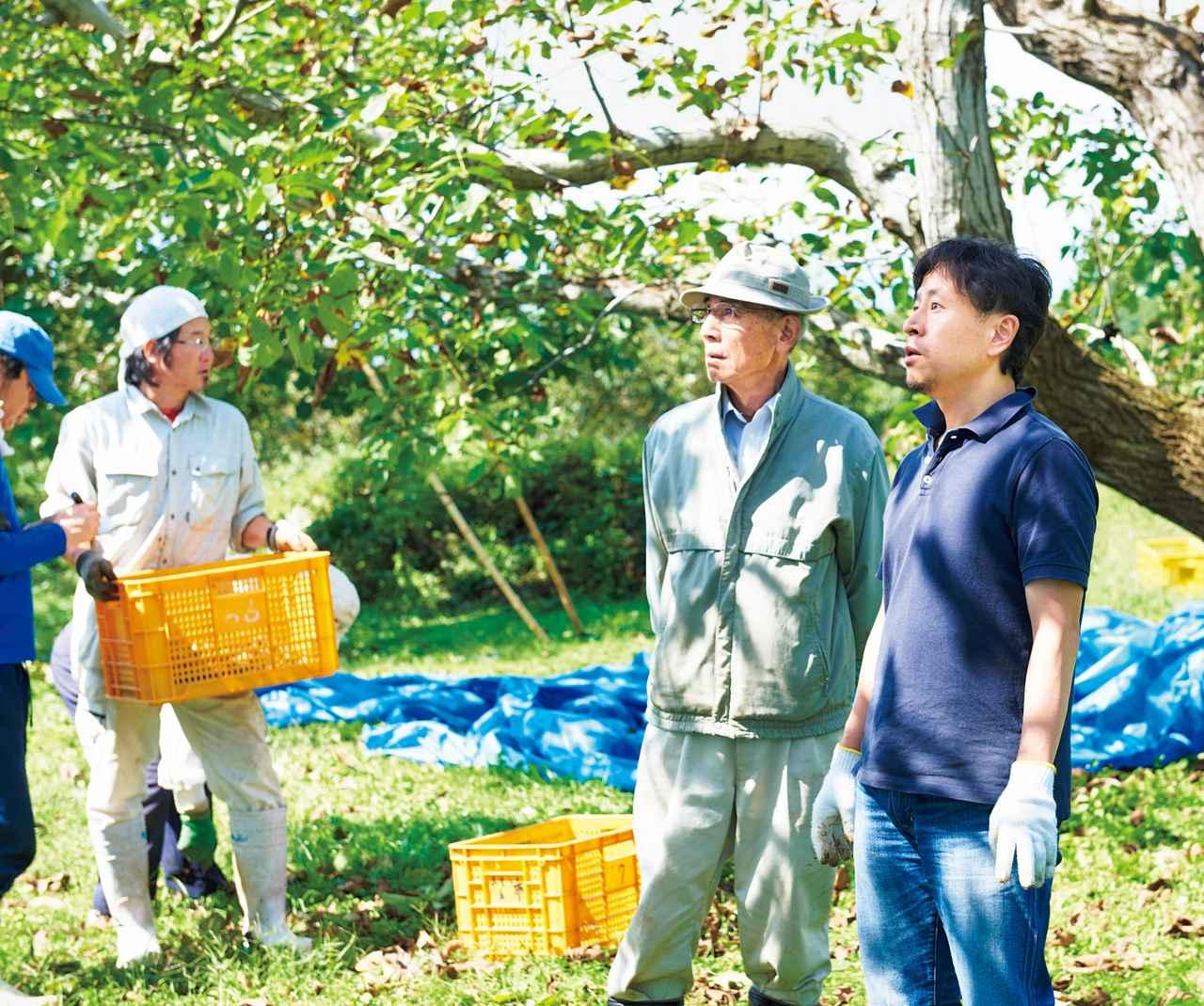 画像: 影山さん(右)と元信州大学教授の矢嶋征雄さん。長年、くるみを研究する矢嶋さんは、ピーク時の10分の1に落ちた東御市のくるみ生産量を上げるために、苗木づくりなどで試行錯誤を続けている