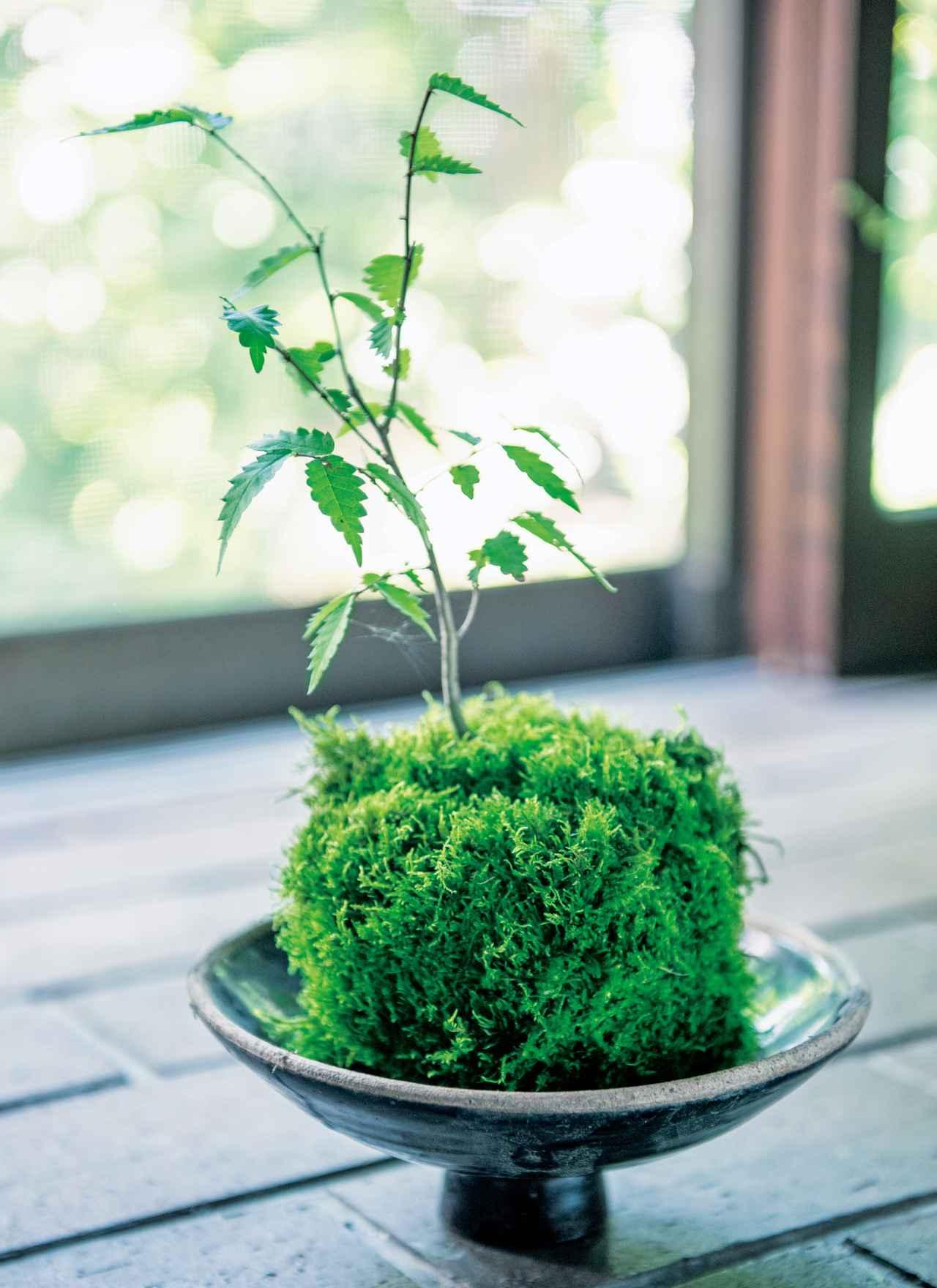 画像: 福森雅武さんの「土楽」の土鍋のふたは、丸みが、こけ玉によく似合う