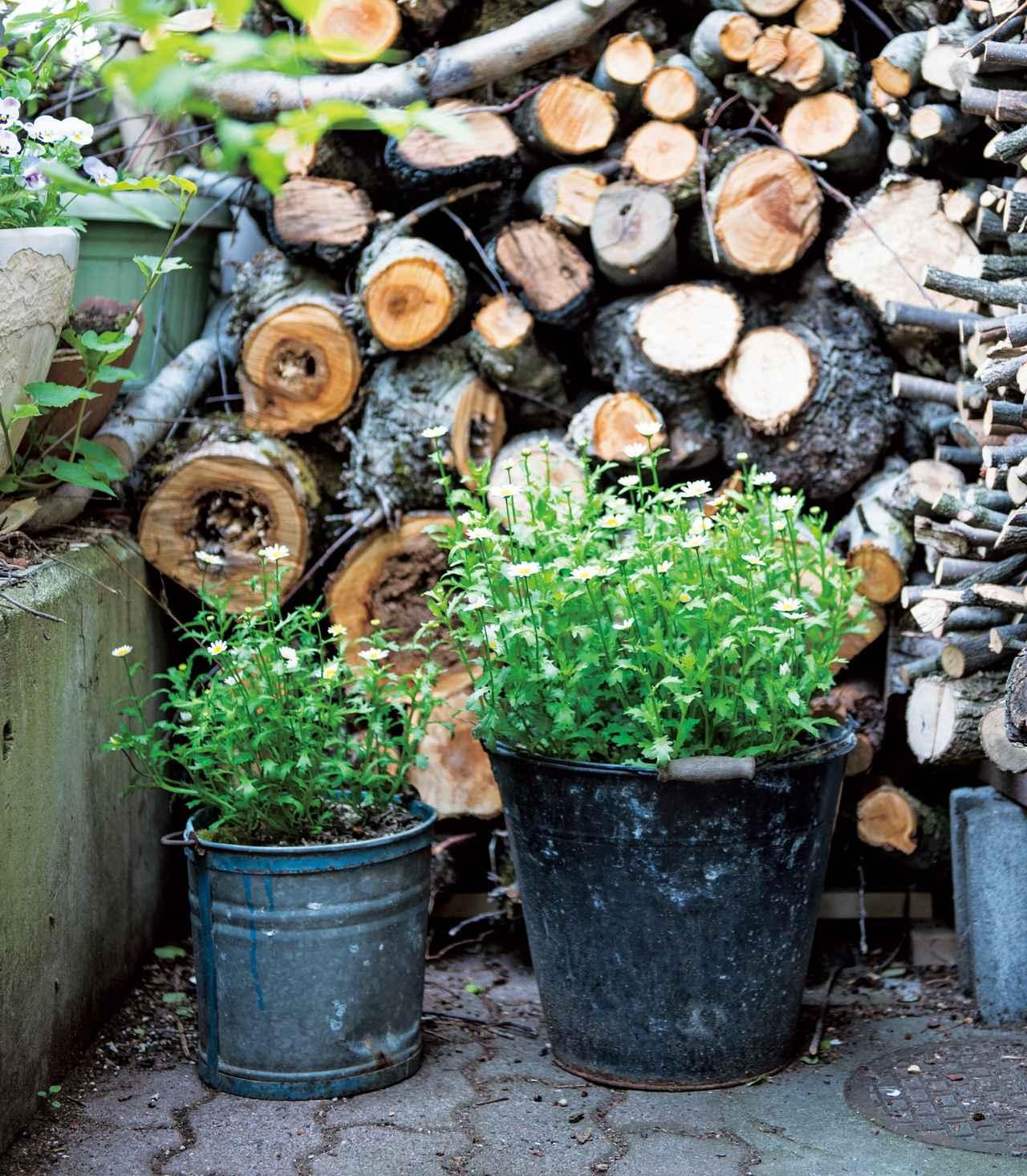 画像: 愛用のバケツを持ち運び自由な植木鉢に変身させるアイデアを思いついたときは、うれしくて小躍りしてしまったそう