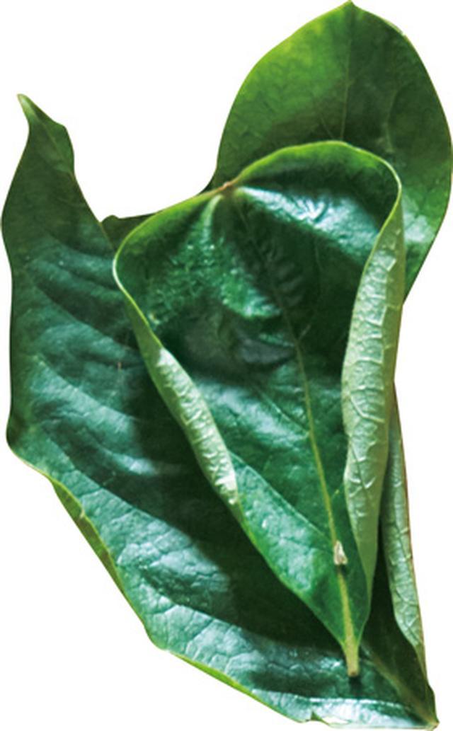 画像3: 柿の葉