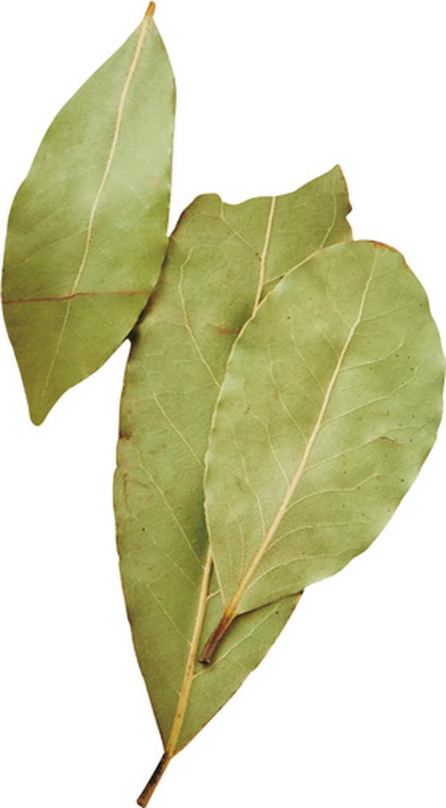 画像1: 月桂樹