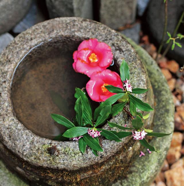 画像: 隅々にまで手入れがゆき届いた美しい庭。水面に光がきらきらと反射するつくばいにも、季節の彩りを添えて