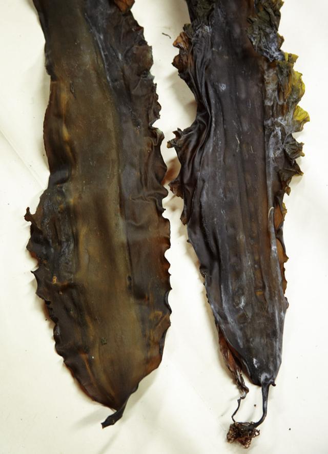 画像: 右が巻く前の昆布で、左が巻いたあと。しわがしっかりのびている