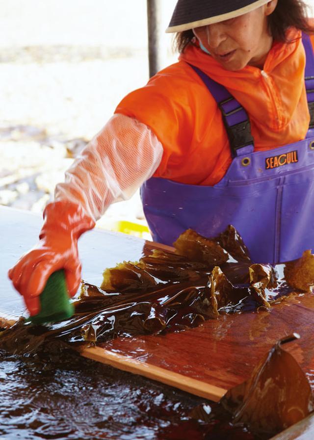 画像: 一枚一枚、ていねいに手作業で、昆布の汚れを取っていく