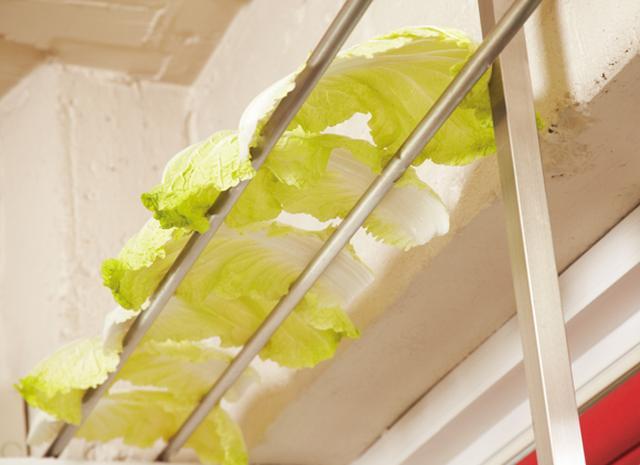 画像: 天井近くに棒を2本渡し、そこにひっかけて白菜を広げ、ときどきひっくり返しながら、十分に乾かす