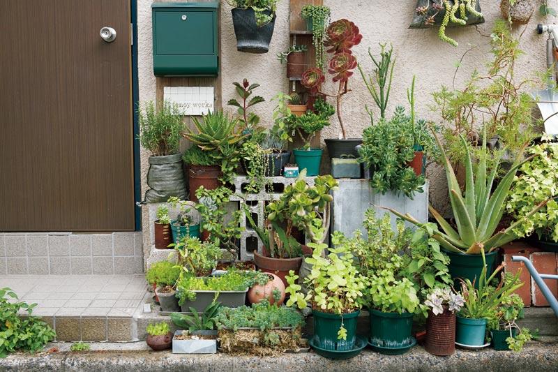 画像: 玄関前は、小さなジャングル。この界隈は、玄関先に植木を置いている人も多いので、近所の人とのちょっとした会話のきっかけにも。「多肉植物は、まめな水やりは必要ないのですが、長く出かけるときはご近所さんにお願いすることも」