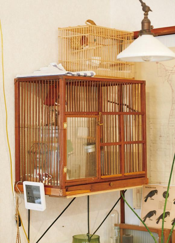 画像: ジュウシマツのムギも飛松家の一員。「仕事が全然なくて、ひまでしかたなかったころにつくった」という中央の鳥かごは、ひごの一本一本まで弘隆さんが削ってつくったという渾身の作